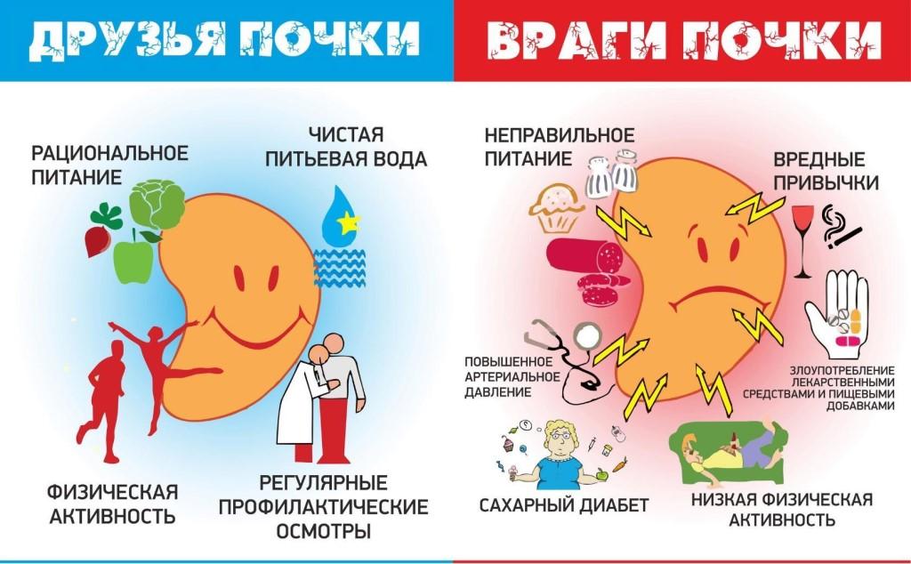 Заболевания почек, решения проблем и восстановление витаминами БАД Vision